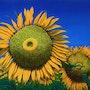 Tournesols / Sunflowers. Claude Guillemet