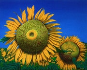Tournesols / Sunflowers. Claude Guillemet