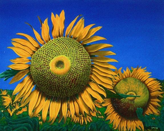 Tournesols / Sunflowers. Claude Guillemet Claude Guillemet