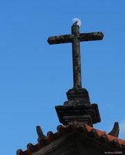 L'oiseau béatifié. Geoffroy Jooris