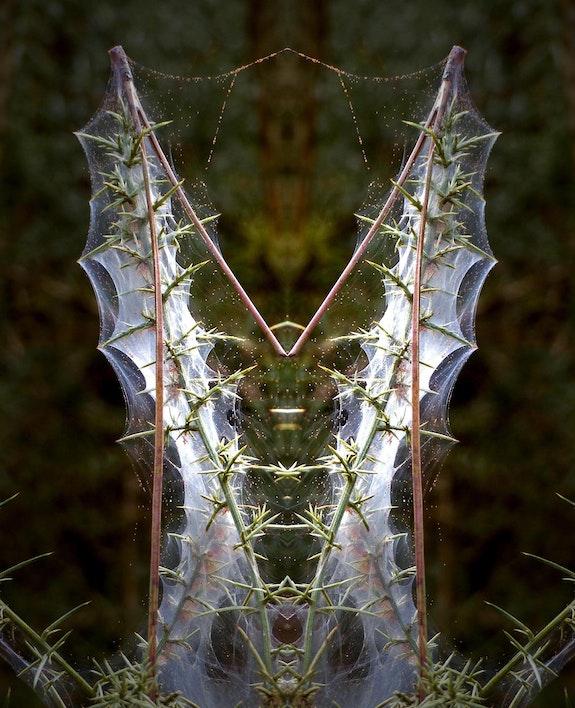 Monogramme…. Janeon Janeon Photos
