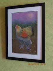 Le coq Brahama (Grosse poule de Race).