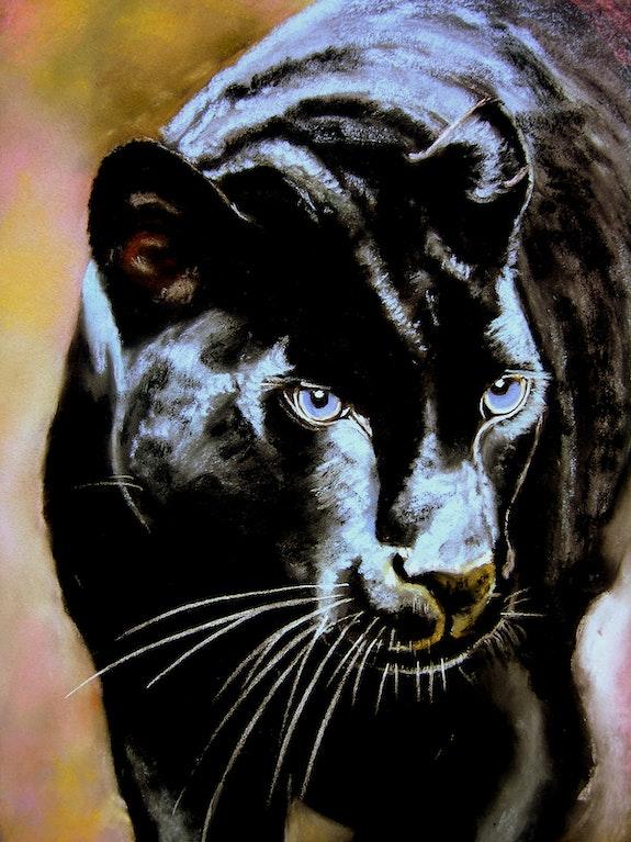 La panthère noire. B. Sannier Bernard Sannier