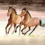 Galop de chevaux. Manou