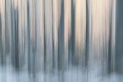 Aube glaciale, Forêts mystiques 1.40 X 60 cm, papier mat FineArt, 2014,. Chez Moi, Chez Toi