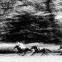 Course de chevaux. Jorg Becker