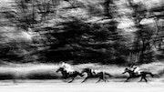 Course de chevaux.