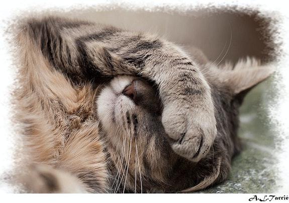 J'veux pas voir chat !. Anne-Lucie Tarrie Altarrié