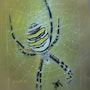Tigerspine (l'araignée des jardins). Michel. Gouyet