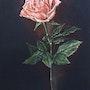 Rose. Nadia Turpault