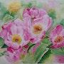Pivoines herbacees great lady à fleurs simples. Aquarellise