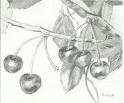 Le temps des cerises.