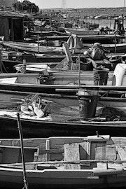 Séte, les barques de pêches..