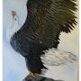 Aigle royal. Martine Moricet