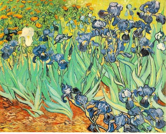 Iris.  Vincent Van Gogh