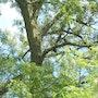 Dans mon jardin, surprise un hiboux moyen duc. Dco La Fée Castalia