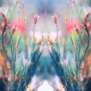 Fleurs sauvages. Marie Carteron