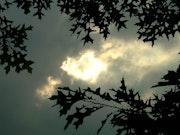 Pin Oak Leaves and Sky.