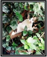 Le Chat. Abir Hassouna