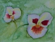 Divine orchidée.