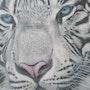 Tigre blanc d'apre une photos prise de moi meme. Eric Mangin