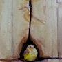 Un oiseau en Egypte. Yokozaza