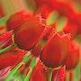 Une fleur à la boutonnière. Marie Carteron