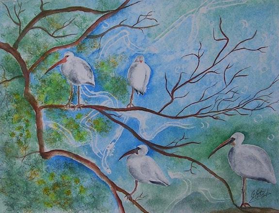 Everglades. Ghislaine Phelut-Sanchez Ghislaine Phelut