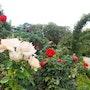 Champs de fleurs. Abir Hassouna