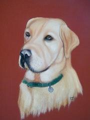 Portrait d'un labrador.