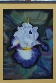 L'iris prince des jardins !.