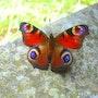 Un papillon multicolor sur une pierre qui habillait une ancienne cheminée. Dco La Fée Castalia