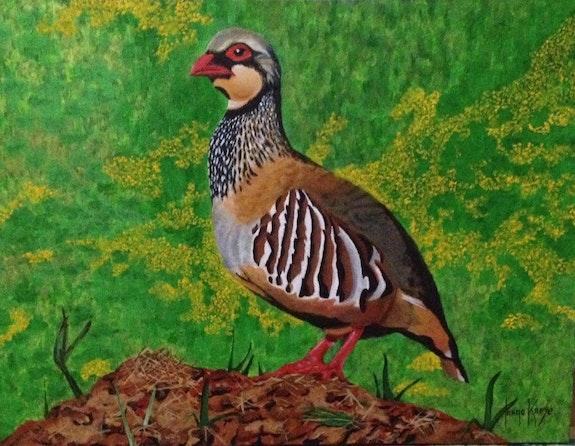Partridge. Jorge Kreye Jorge Kreye