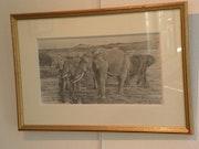 Éléphants au bord de la rivière s'abreuvant….