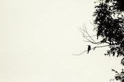 Guêpier en ombre chinoise. Kevin Curtil