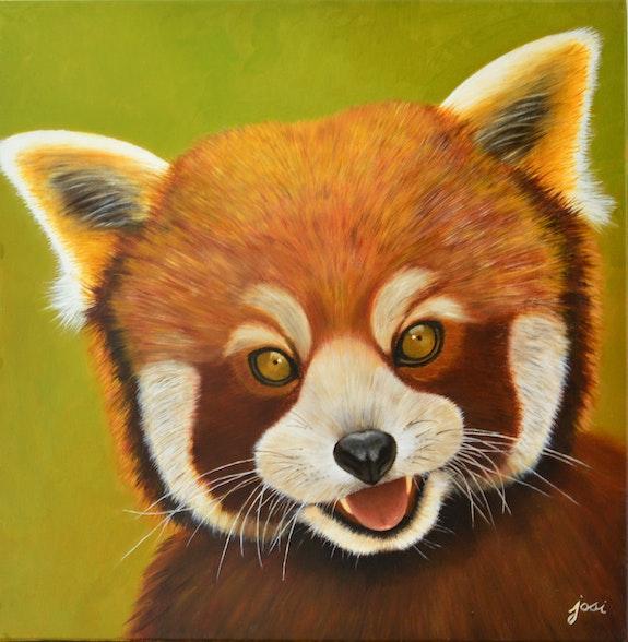 Panda roux. Josi Josi