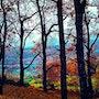 El bosque animado. Paco Morales