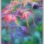 Les couleurs de mon jardin d'automne. Christine Busquet