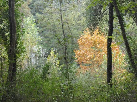 La forêt.  Gilbert Verani