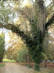 L'arbre.