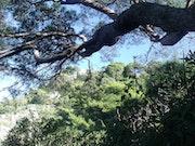L'arbre 3.