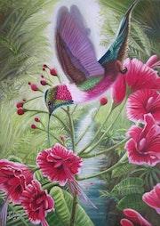 Beija flör tropical. Atiliobrasil