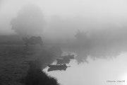 La brume matinal. Viktoriia Vidal Vb