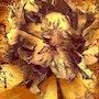 Golden flower. Jeannette Allary