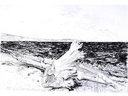 Bahía Rinconada, Estrecho de Magallanes - chile. Manri