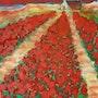 Les tulipes rouges. Lyne Le Grand