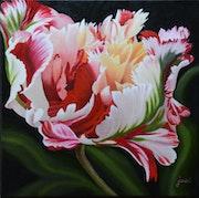 Tulipe perroquet. Josi