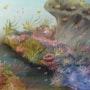 Nuage de coraux. Prince Singer De Polignac