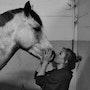 «On achève bien les chevaux» alors achevons une fois pour toute. Ameise