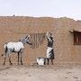 Zebra. Banksy